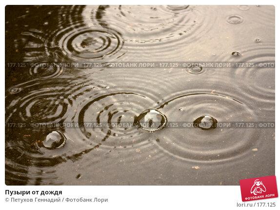 Пузыри от дождя, фото № 177125, снято 27 июня 2007 г. (c) Петухов Геннадий / Фотобанк Лори