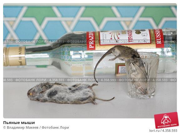 Купить «Пьяные мыши», фото № 4358593, снято 14 февраля 2013 г. (c) Владимир Макеев / Фотобанк Лори