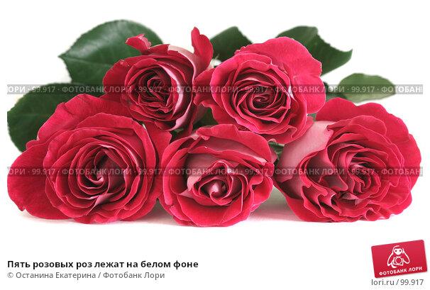Пять розовых роз лежат на белом фоне, фото № 99917, снято 12 октября 2007 г. (c) Останина Екатерина / Фотобанк Лори