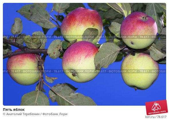 Купить «Пять яблок», фото № 78617, снято 11 августа 2007 г. (c) Анатолий Теребенин / Фотобанк Лори