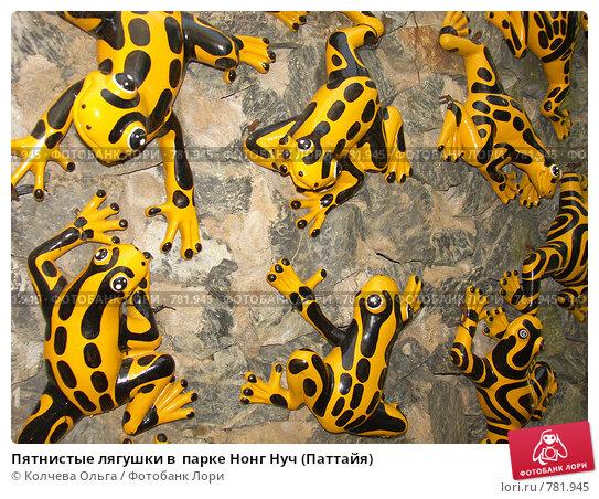 Купить «Пятнистые лягушки в  парке Нонг Нуч (Паттайя)», фото № 781945, снято 21 марта 2009 г. (c) Колчева Ольга / Фотобанк Лори