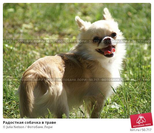 Радостная собачка в траве, фото № 50717, снято 26 мая 2007 г. (c) Julia Nelson / Фотобанк Лори