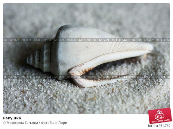 Ракушка, фото № 61769, снято 18 мая 2007 г. (c) Морозова Татьяна / Фотобанк Лори