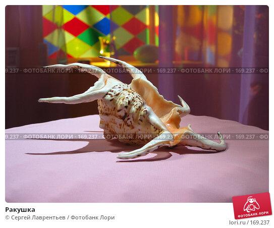 Ракушка, фото № 169237, снято 18 августа 2003 г. (c) Сергей Лаврентьев / Фотобанк Лори