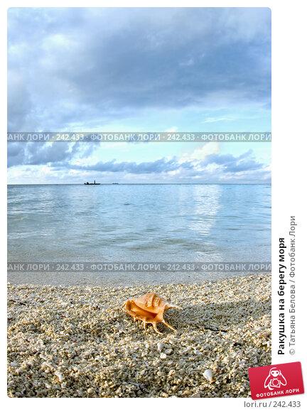 Ракушка на берегу моря, фото № 242433, снято 16 марта 2008 г. (c) Татьяна Белова / Фотобанк Лори