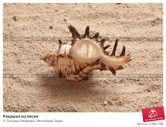 Ракушка на песке. Стоковое фото, фотограф Татьяна Иванова / Фотобанк Лори
