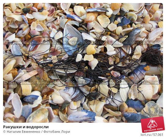 Ракушки и водоросли, фото № 57061, снято 19 сентября 2006 г. (c) Наталия Евмененко / Фотобанк Лори