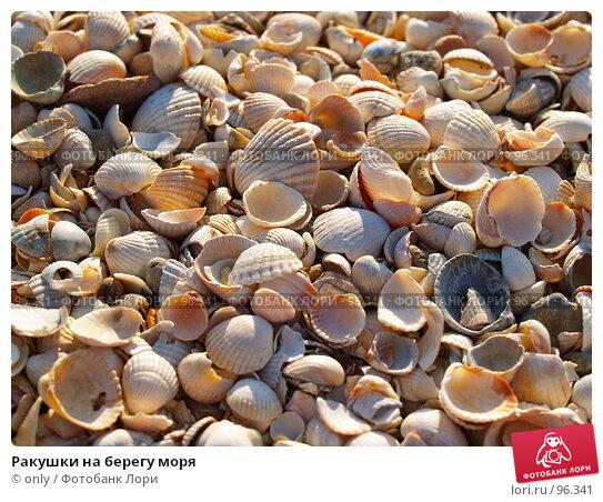 Ракушки на берегу моря, фото № 96341, снято 6 августа 2007 г. (c) only / Фотобанк Лори