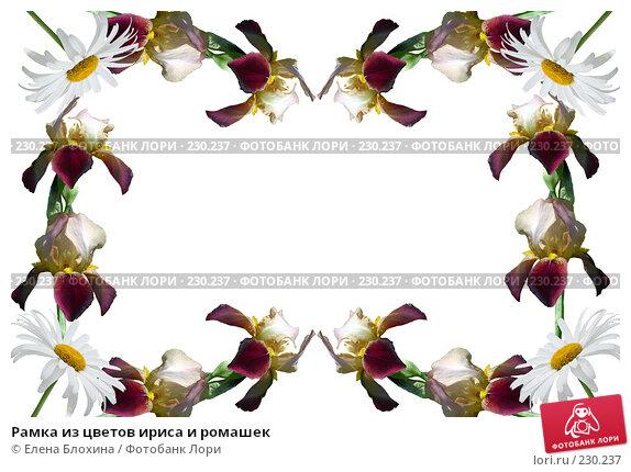 Рамка из цветов ириса и ромашек, фото № 230237, снято 24 апреля 2007 г. (c) Елена Блохина / Фотобанк Лори