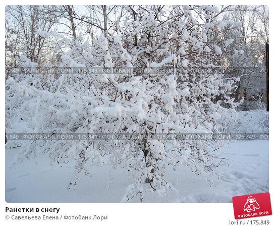 Ранетки в снегу, фото № 175849, снято 10 января 2008 г. (c) Cавельева Елена / Фотобанк Лори