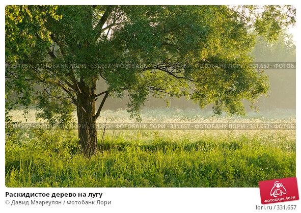 Раскидистое дерево на лугу, фото № 331657, снято 22 июня 2008 г. (c) Давид Мзареулян / Фотобанк Лори