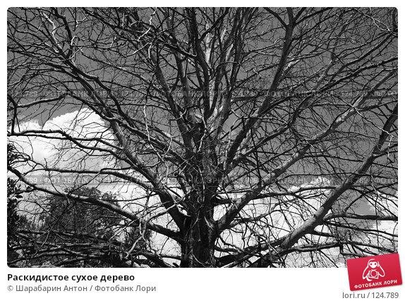 Раскидистое сухое дерево, фото № 124789, снято 15 июля 2007 г. (c) Шарабарин Антон / Фотобанк Лори