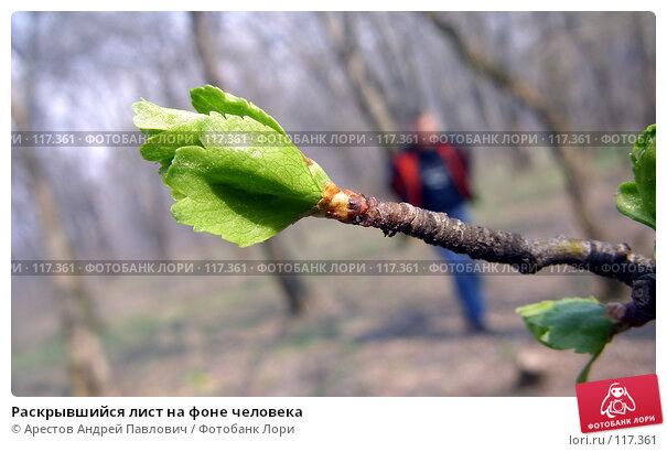 Раскрывшийся лист на фоне человека, фото № 117361, снято 8 октября 2006 г. (c) Арестов Андрей Павлович / Фотобанк Лори