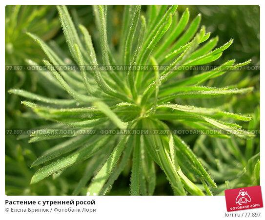 Растение с утренней росой, фото № 77897, снято 21 июля 2007 г. (c) Елена Бринюк / Фотобанк Лори