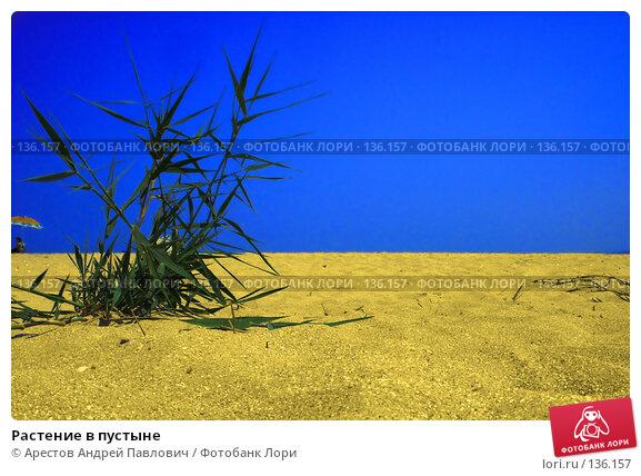 Растение в пустыне, фото № 136157, снято 20 июля 2007 г. (c) Арестов Андрей Павлович / Фотобанк Лори
