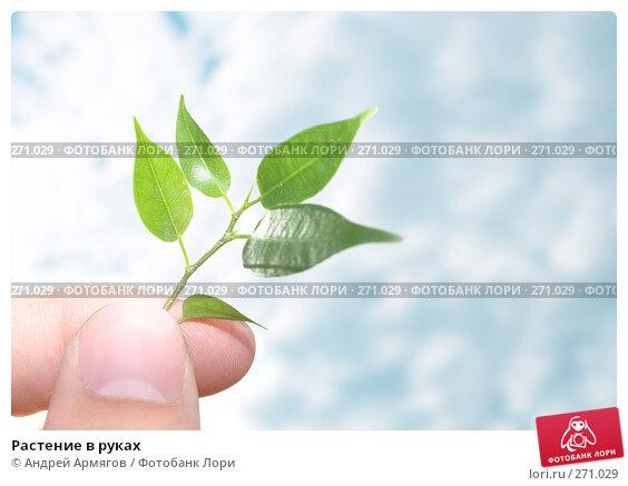 Растение в руках, фото № 271029, снято 8 июня 2007 г. (c) Андрей Армягов / Фотобанк Лори