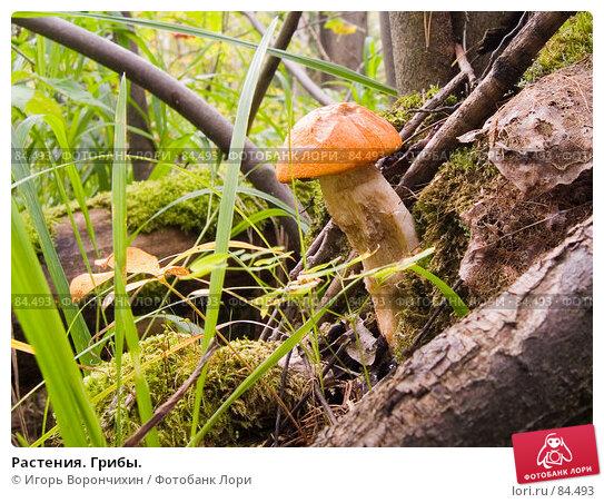 Растения. Грибы., фото № 84493, снято 15 сентября 2007 г. (c) Игорь Ворончихин / Фотобанк Лори