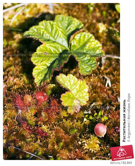 Растительная жизнь, фото № 92841, снято 11 августа 2007 г. (c) Argument / Фотобанк Лори