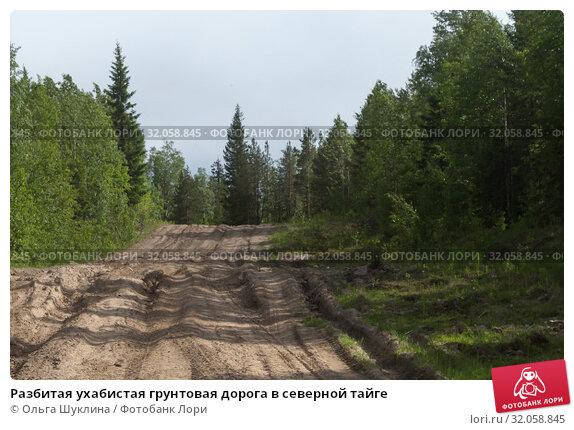 Разбитая ухабистая грунтовая дорога в северной тайге. Стоковое фото, фотограф Ольга Шуклина / Фотобанк Лори