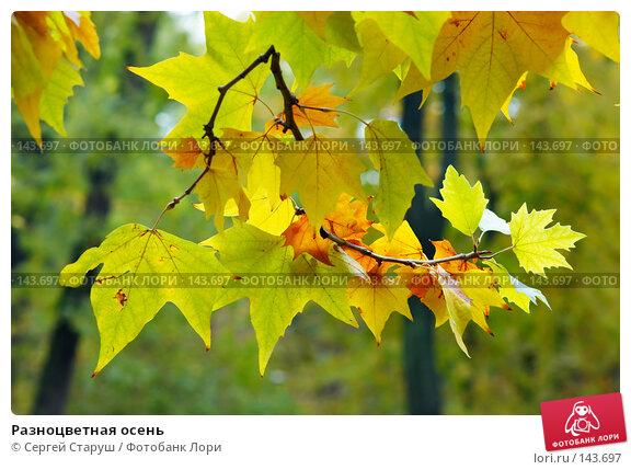 Разноцветная осень, фото № 143697, снято 27 октября 2007 г. (c) Сергей Старуш / Фотобанк Лори