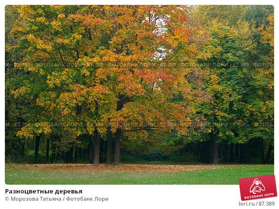 Разноцветные деревья, фото № 87389, снято 3 октября 2005 г. (c) Морозова Татьяна / Фотобанк Лори