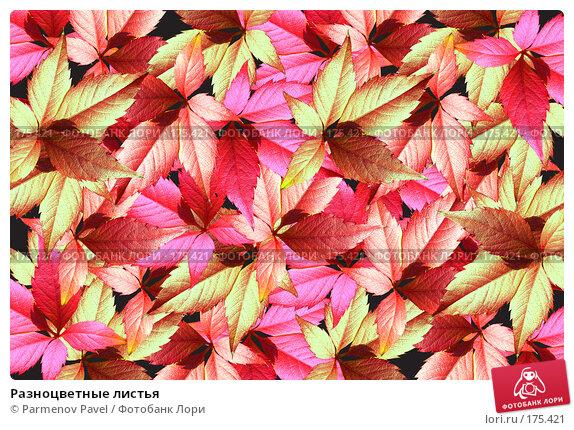 Разноцветные листья, фото № 175421, снято 11 января 2008 г. (c) Parmenov Pavel / Фотобанк Лори