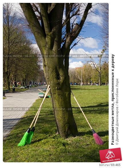 Разноцветные метла, прислоненные к дереву, фото № 69465, снято 21 апреля 2007 г. (c) Дмитрий Доможиров / Фотобанк Лори
