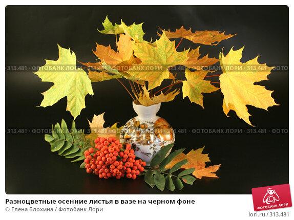 Разноцветные осенние листья в вазе на черном фоне, фото № 313481, снято 12 сентября 2007 г. (c) Елена Блохина / Фотобанк Лори