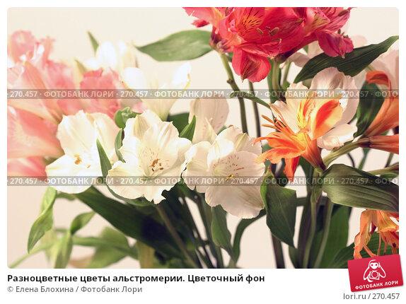 Разноцветные цветы альстромерии. Цветочный фон, фото № 270457, снято 25 апреля 2008 г. (c) Елена Блохина / Фотобанк Лори
