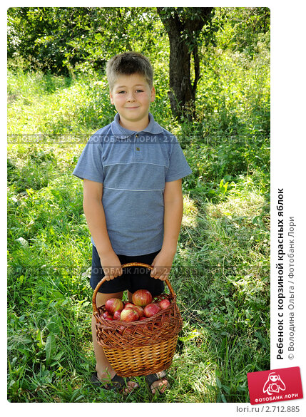 корзина яблок фото