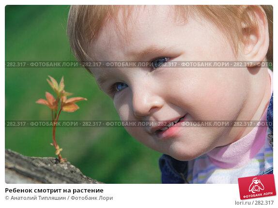 Ребенок смотрит на растение, фото № 282317, снято 12 мая 2007 г. (c) Анатолий Типляшин / Фотобанк Лори