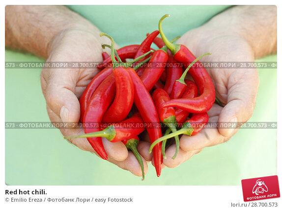 Купить «Red hot chili.», фото № 28700573, снято 19 июня 2018 г. (c) easy Fotostock / Фотобанк Лори