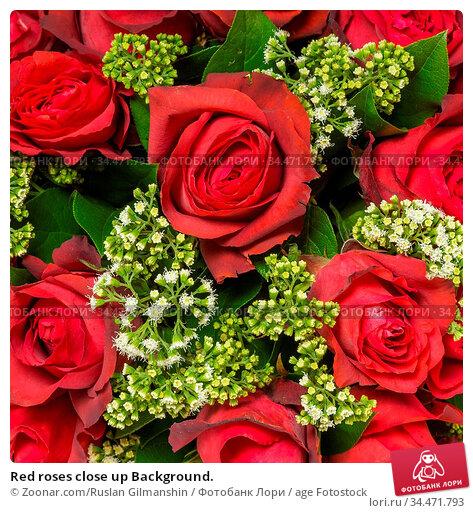 Red roses close up Background. Стоковое фото, фотограф Zoonar.com/Ruslan Gilmanshin / age Fotostock / Фотобанк Лори