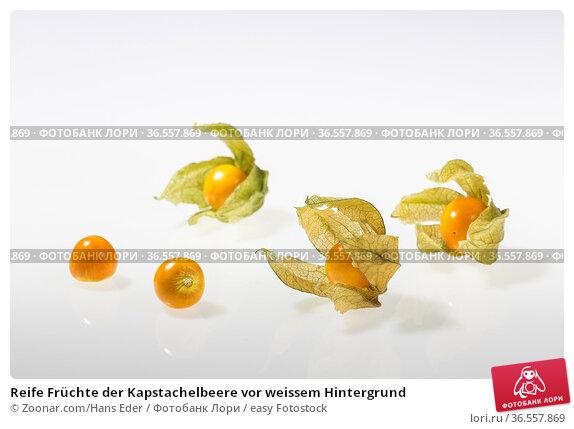 Reife Früchte der Kapstachelbeere vor weissem Hintergrund. Стоковое фото, фотограф Zoonar.com/Hans Eder / easy Fotostock / Фотобанк Лори