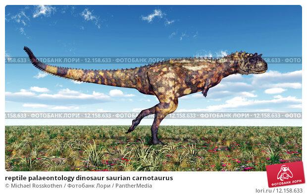 Купить «reptile palaeontology dinosaur saurian carnotaurus», фото № 12158633, снято 22 сентября 2019 г. (c) PantherMedia / Фотобанк Лори