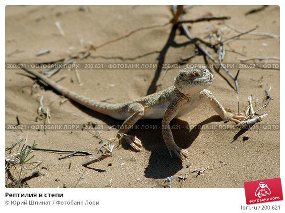 Рептилия в степи, фото № 200621, снято 17 августа 2006 г. (c) Юрий Шпинат / Фотобанк Лори