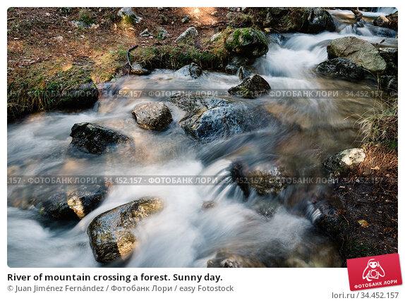 River of mountain crossing a forest. Sunny day. Стоковое фото, фотограф Juan Jiménez Fernández / easy Fotostock / Фотобанк Лори