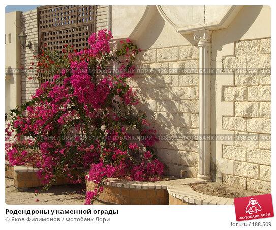 Родендроны у каменной ограды, фото № 188509, снято 14 января 2008 г. (c) Яков Филимонов / Фотобанк Лори
