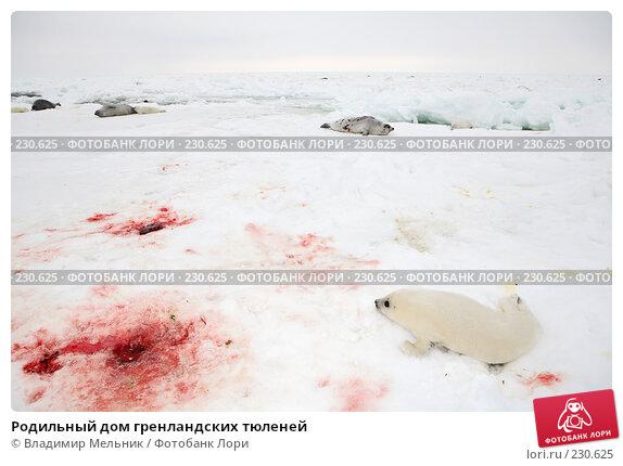 Родильный дом гренландских тюленей, фото № 230625, снято 11 марта 2008 г. (c) Владимир Мельник / Фотобанк Лори