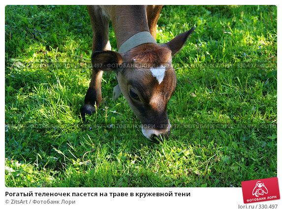 Рогатый теленочек пасется на траве в кружевной тени, фото № 330497, снято 6 июня 2008 г. (c) ZitsArt / Фотобанк Лори