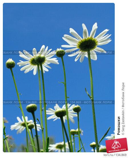 Купить «Ромашки», фото № 134869, снято 28 июня 2005 г. (c) Serg Zastavkin / Фотобанк Лори
