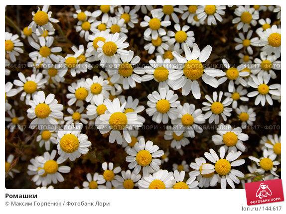 Ромашки, фото № 144617, снято 6 мая 2006 г. (c) Максим Горпенюк / Фотобанк Лори