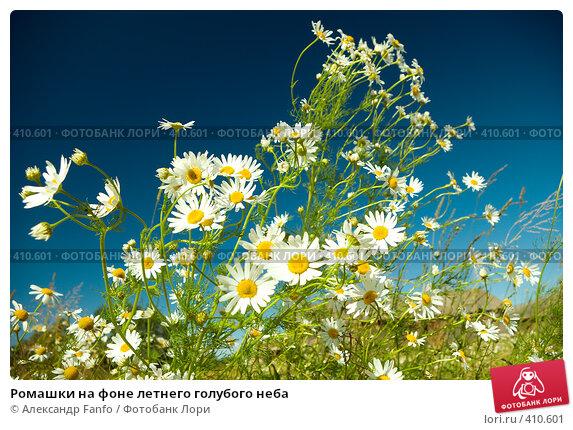 Купить «Ромашки на фоне летнего голубого неба», фото № 410601, снято 21 октября 2018 г. (c) Александр Fanfo / Фотобанк Лори