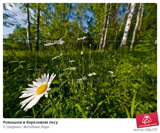 Ромашки в березовом лесу, фото № 336177, снято 21 июня 2008 г. (c) Liseykina / Фотобанк Лори
