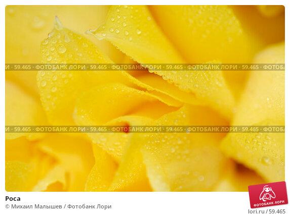 Роса, фото № 59465, снято 8 мая 2007 г. (c) Михаил Малышев / Фотобанк Лори