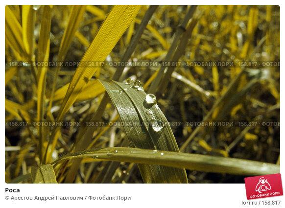 Купить «Роса», фото № 158817, снято 16 августа 2007 г. (c) Арестов Андрей Павлович / Фотобанк Лори