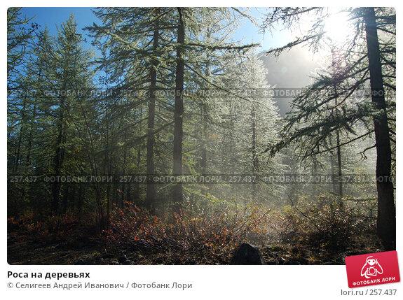 Роса на деревьях, фото № 257437, снято 26 августа 2007 г. (c) Селигеев Андрей Иванович / Фотобанк Лори