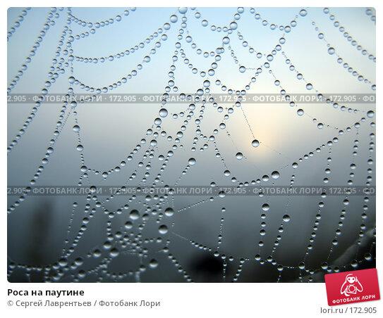 Роса на паутине, фото № 172905, снято 29 августа 2006 г. (c) Сергей Лаврентьев / Фотобанк Лори