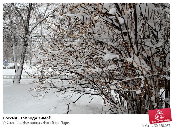 Россия. Природа зимой. Стоковое фото, фотограф Светлана Федорова / Фотобанк Лори