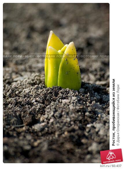 Росток, пробивающийся из земли, фото № 60437, снято 10 апреля 2005 г. (c) Дарья Олеринская / Фотобанк Лори